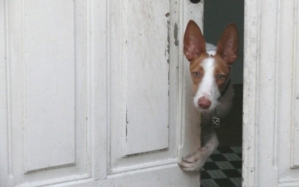 Dastan-sait-ouvrir-et--.salir-les-portes--.jpg