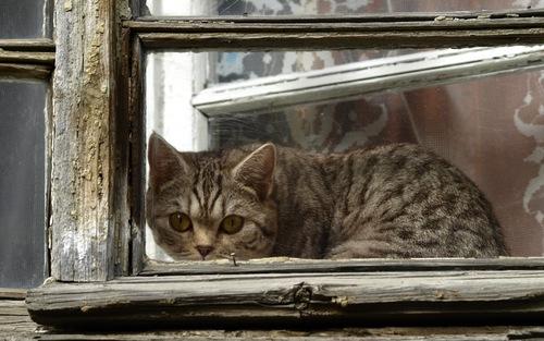 08 - Encore des chats à la fenêtre, en couleurs