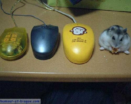 diver modeles de souris