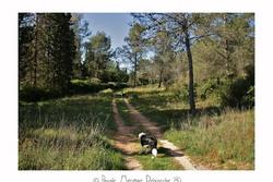 Forêt domaniale Saint Gély du Fesc