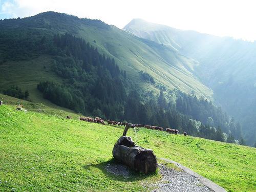 Les alpages du vallon d'Orgeval, surplombés par la pointe d'Arcalod (2217 m)