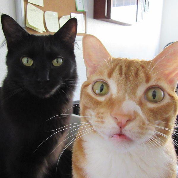 Cole & Marmalade, deux adorables chats