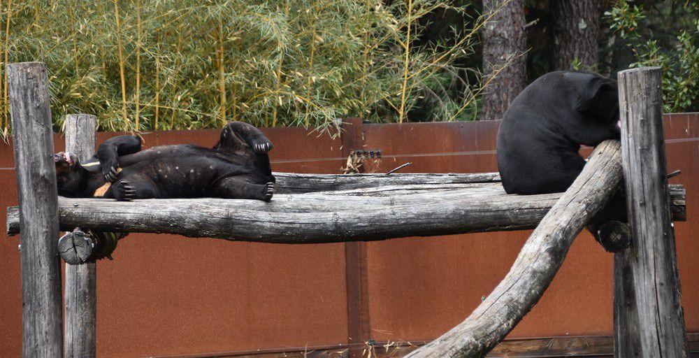 La sieste des ours...