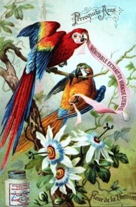 Le-Petit-Livre-des-Oiseaux-2.JPG