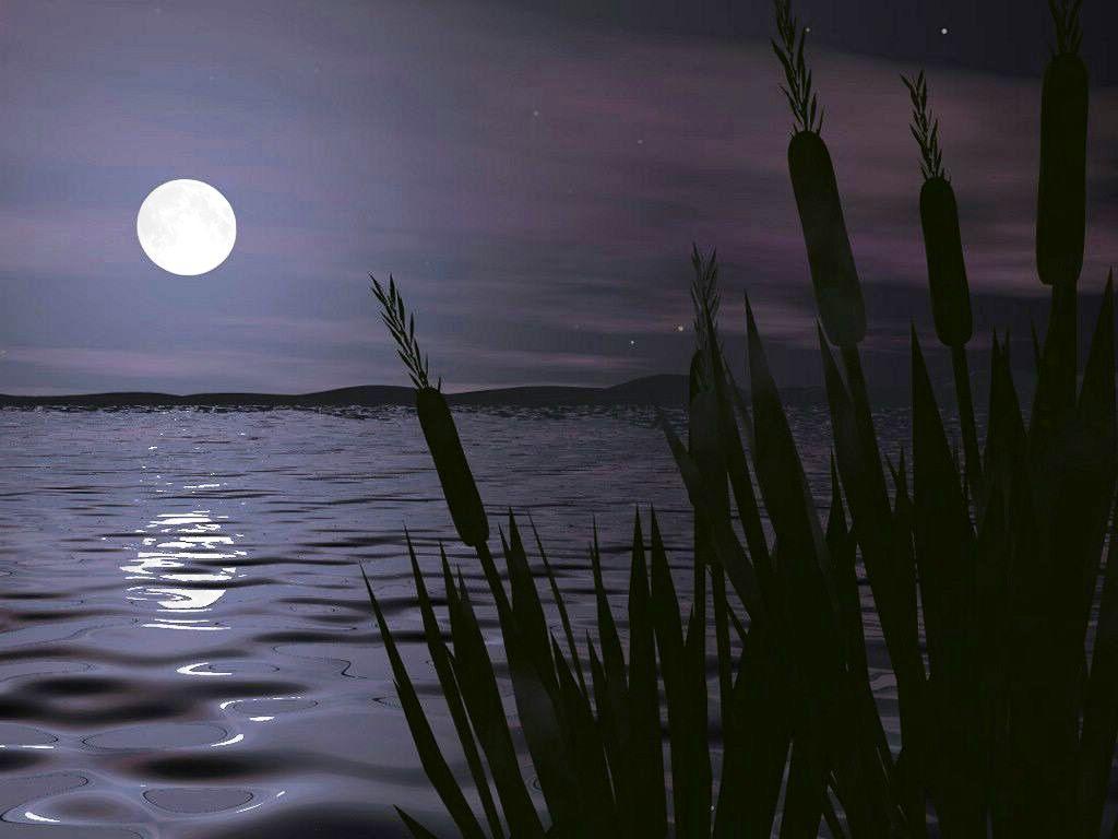 8. Pleine Lune eau et roseaux