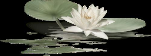 Banniere zen 2 avec une jolie animation de Manola