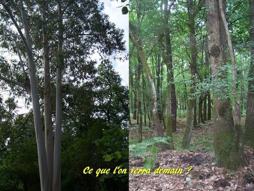 Forêt de demain
