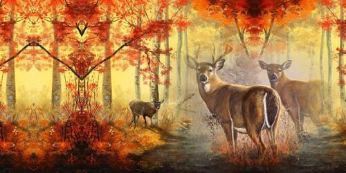 la forêt en automne !