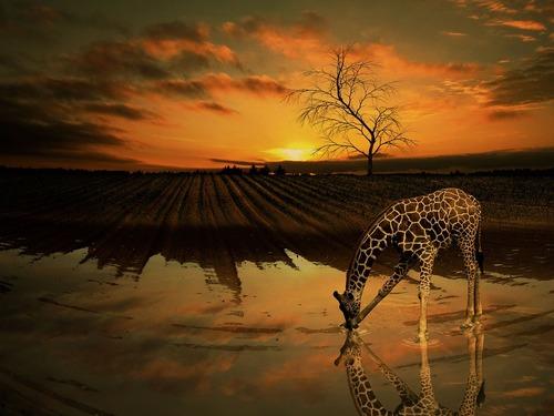 Les animaux sortent la nuit pour éviter de croiser les humains