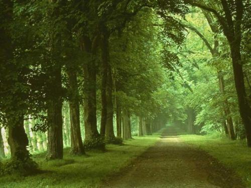 IMAGES et TUBES vert couleur de l'espoir   .:*♥♥`*:: Belle Ange