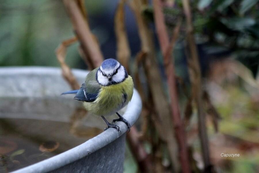 Les migrateurs au jardin...et les autres !