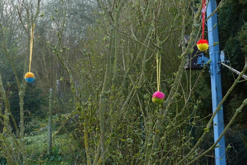 Petit à petit mon jardin prend des couleurs