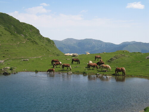 Chevaux au lac d'Arou