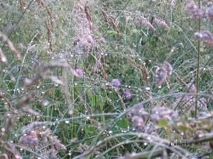 herbes-mouill--es.JPG