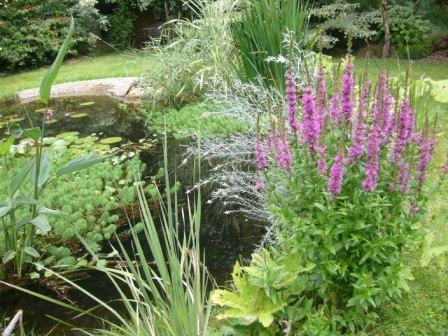 Plantes fleuries de berge le jardin de kern vez for Plantes fleuries vivaces