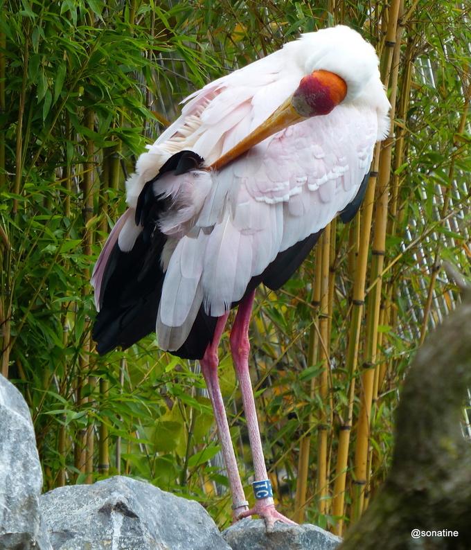 Se peut-il qu'un homme soit moins sage qu'un oiseau (confusius)