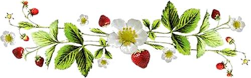 Tarte aux fruits sur sablé breton
