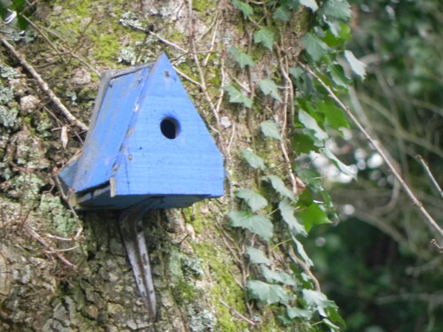 Abris et Nichoirs pour oiseaux
