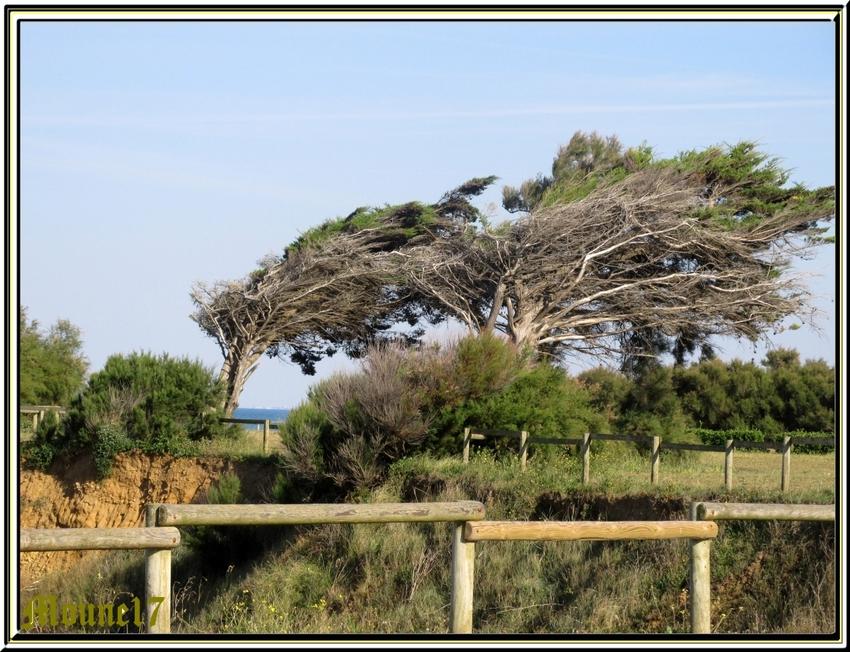 Au nord de l'île d'Oléeon: Chassiron