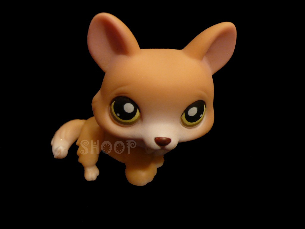 LPS 183