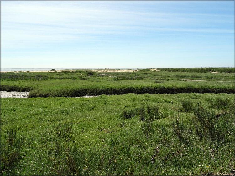 Réserve naturelle de la Baie de l'Aiguillon (Vendée)