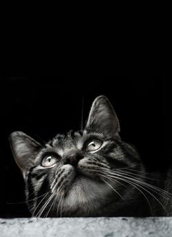 Vric à vrac de chat