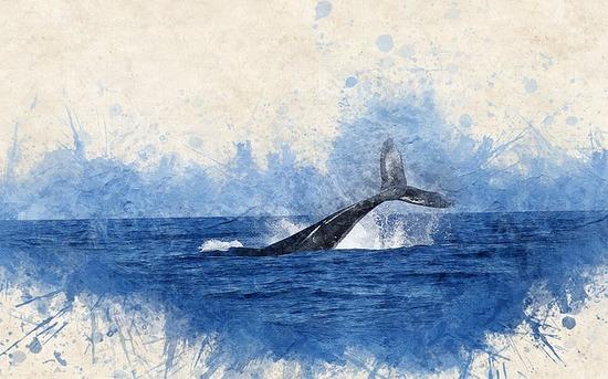 Baleines en vacances