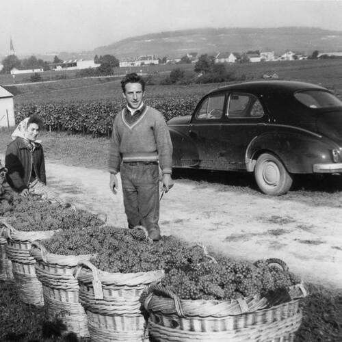 Le temps des vendanges - Marne 1950
