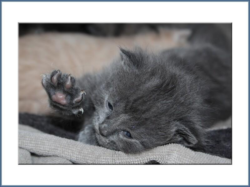 01/07/14, les chatons