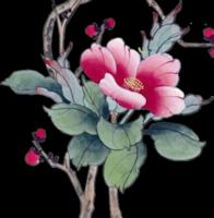 *** Cherry Blossom Time ***