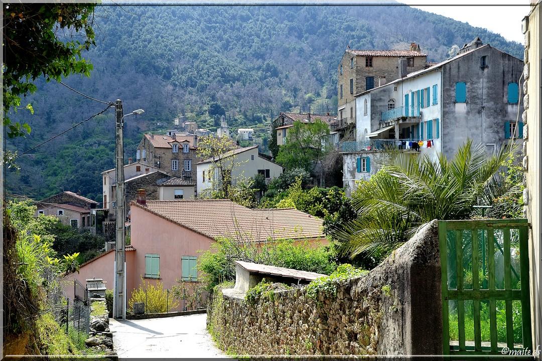 Vico - Corse (3) 11 avril 2014