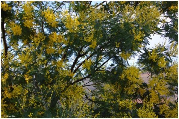 photos-fleurs 0338