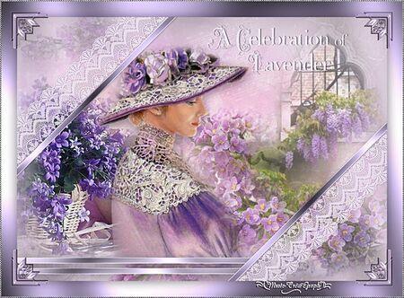 Celebration of Lavender