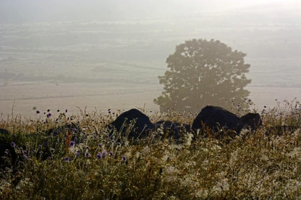 Brume-brouillard-3-8716a.jpg