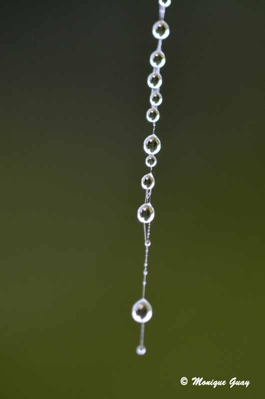 Colliers de perles naturelles
