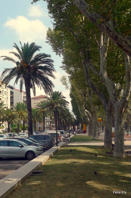 Palmiers et statue...