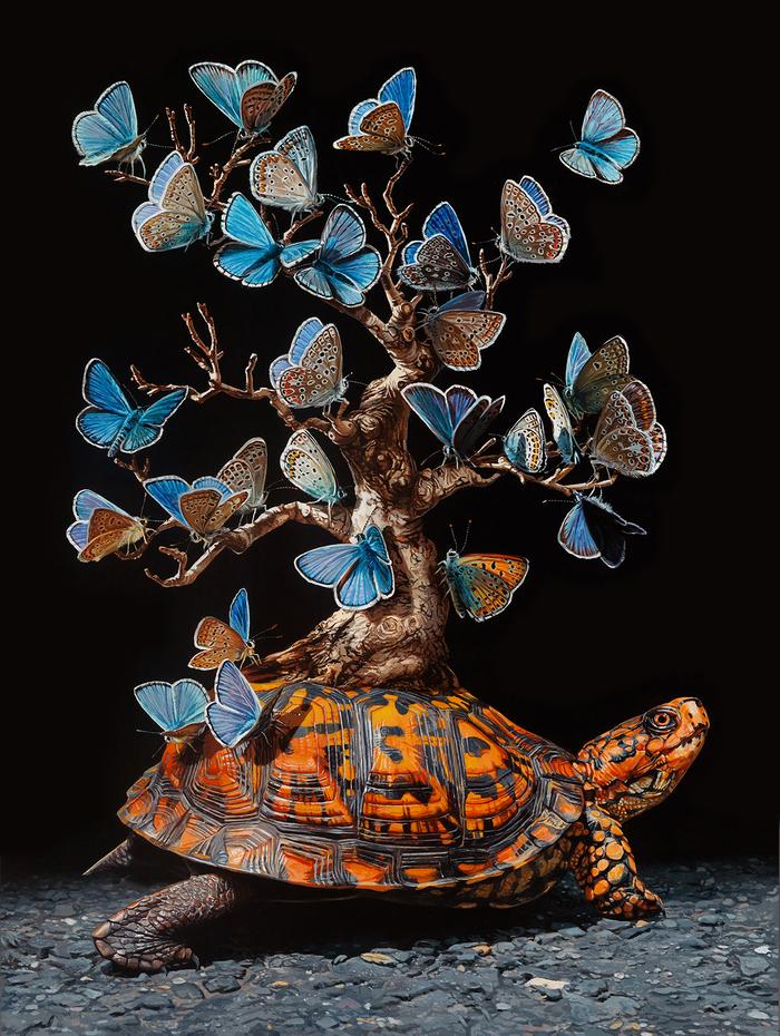 Images Magiques & Fascinantes...