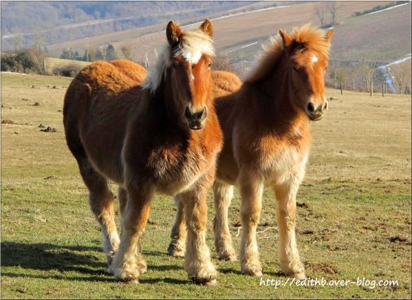 chevaux (39)