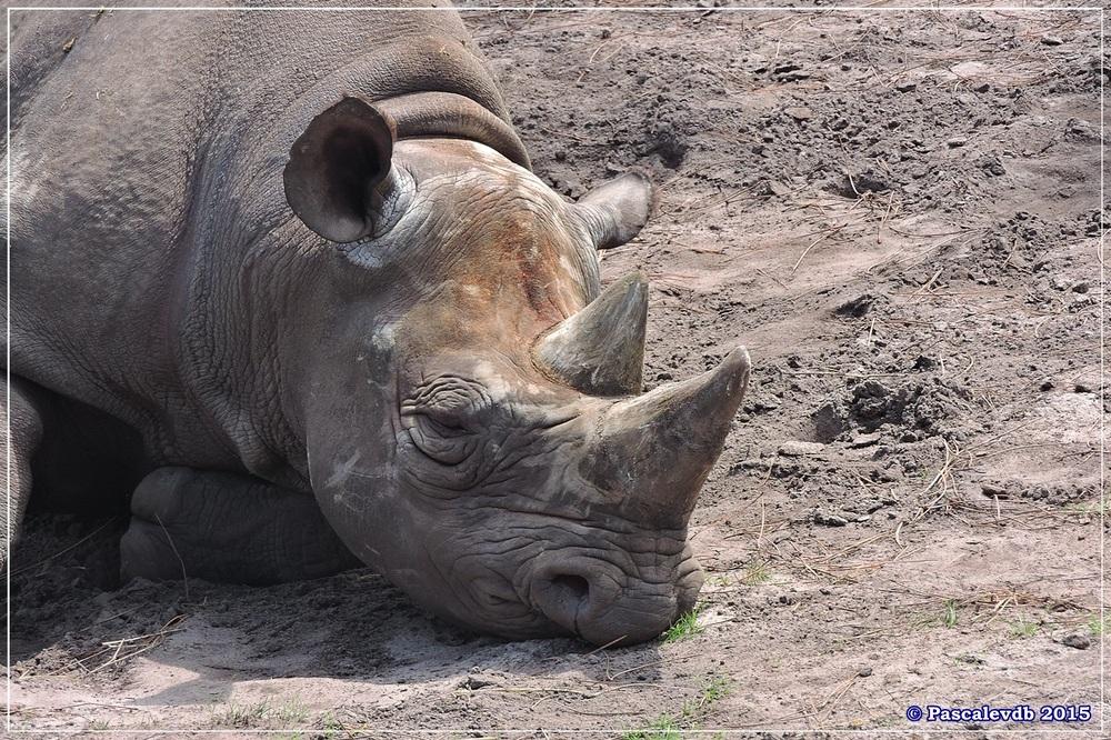 Zoo du Bassin d'Arcachon à La Teste - Août 2015 - 4/11