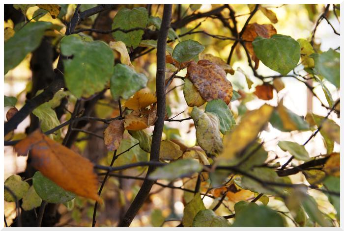 Couleurs d'automne au Jardin des Plantes
