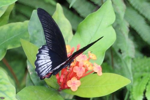 Papillons exotiques de la serre du parc floral à Orléans La Source