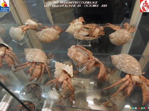 MUSEUM DU COQUILLAGE  9/16   vacances 10/ 2013  SABLES D'OLONNE    15/01/2014