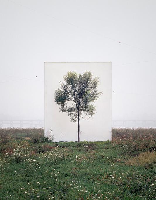 série d'arbres