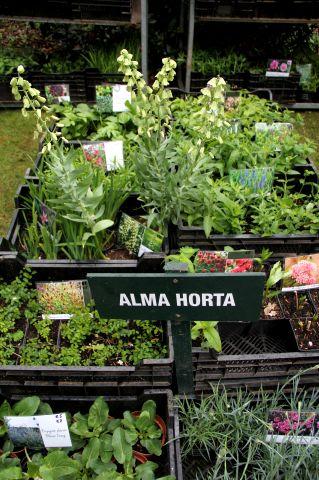 Fête à la Roseraie J - 11 : Alma Horta