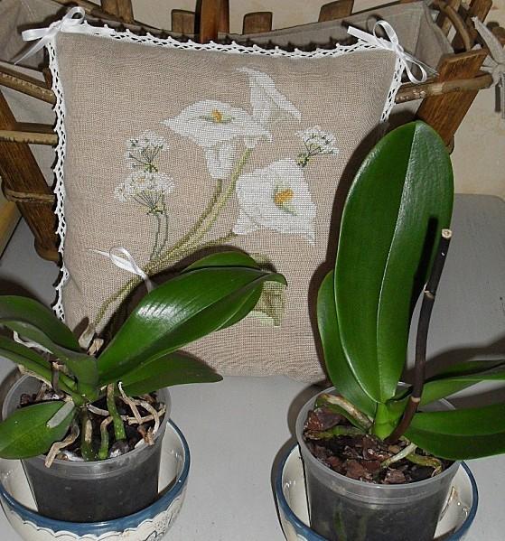 orchidees-030.jpg