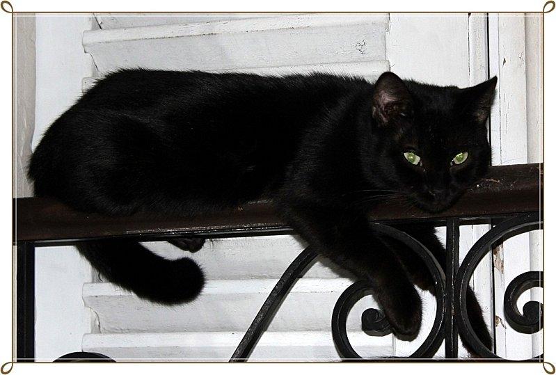 Panthère noire miniature