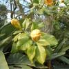Domaine de GAZANIA les fleurs