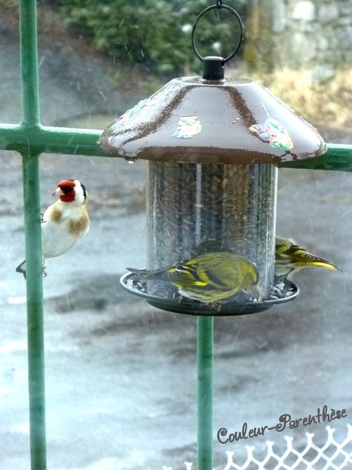 Des oiseaux au balcon!
