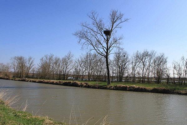 cigogne marais de Beaugeay (1)