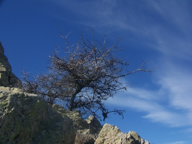 celu di Corsica